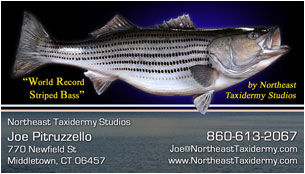 Striped Bass business card